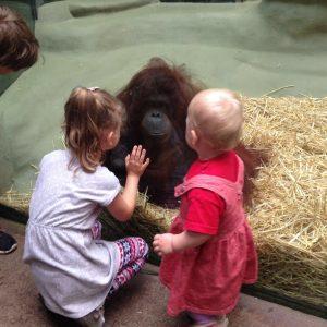 Im Affenhaus die Tiere hautnah erleben