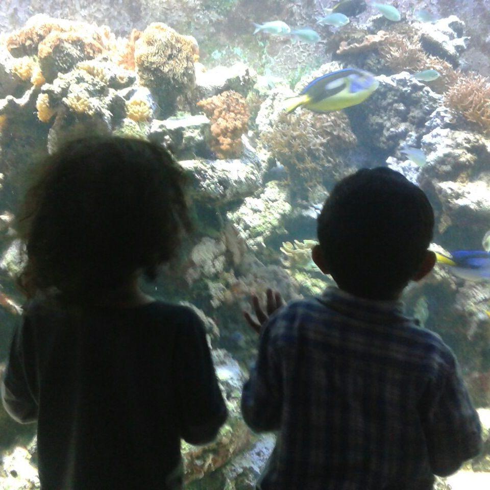 Staunende Kinderaugen im Aquarium