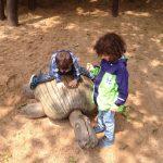 Einmal auf der Schildkröte reiten...