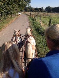 Der Kontakt mit Pferden hilft Kindern und Jugendlichen in schwierigen Situationen