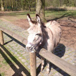 I-ah im Lindentahler Tierpark