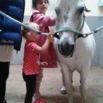Pferde richtig striegeln - ein Spaß für unsere Paria Kids.