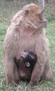 Die Paria Stiftung macht einen Ausflug in den Affenpark Eckenhagen.