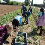 Paria-Kids bei der Ernte
