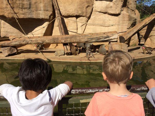 Paria-Kids besuchen den Kölner Zoo.