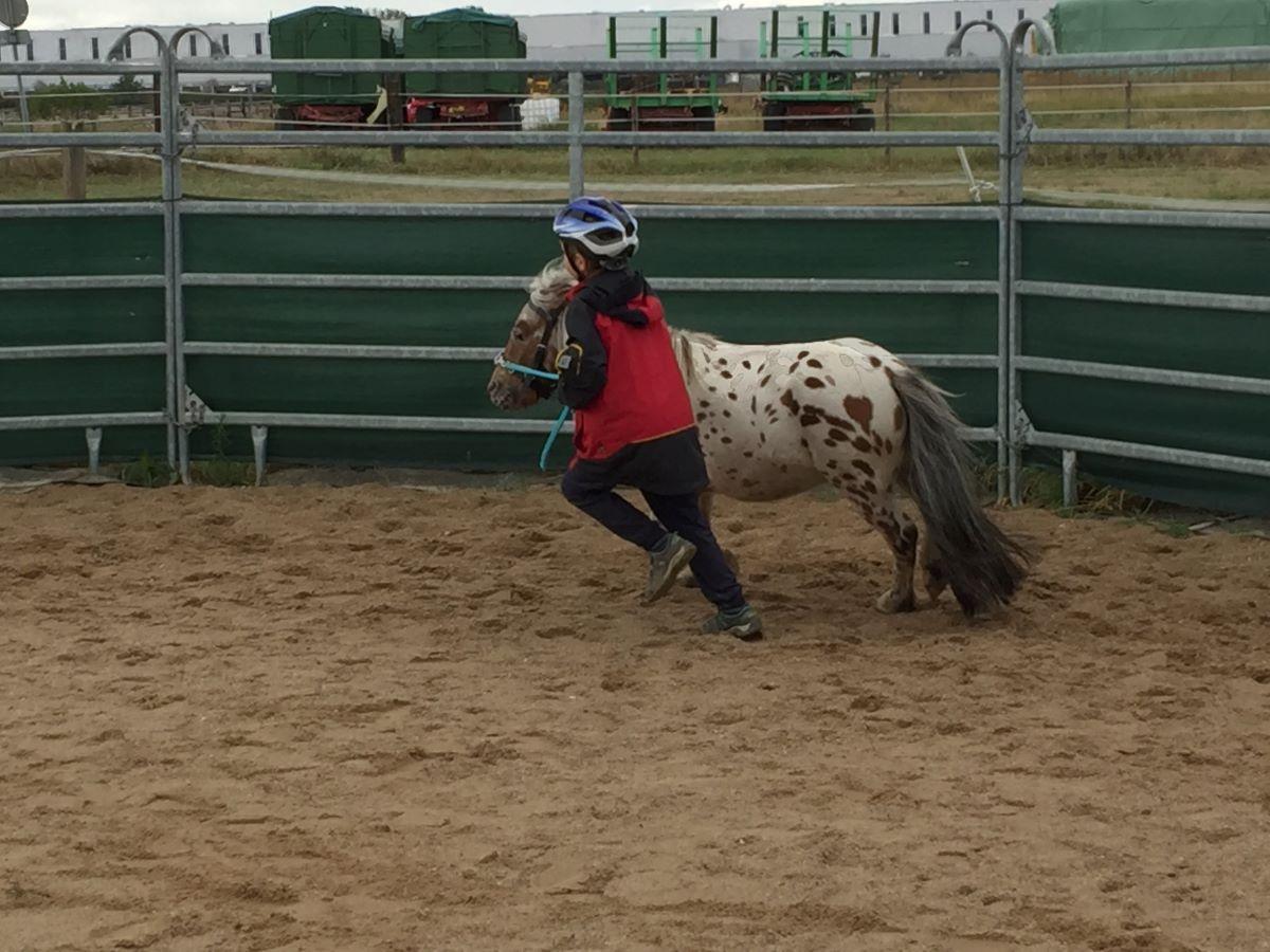 Ein tierisch schönes Wochenende für unsere Paria Kids auf dem Ponyhof